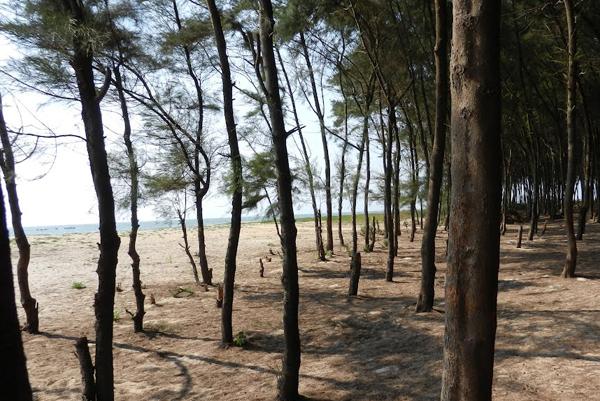 Tannibhavi Beach